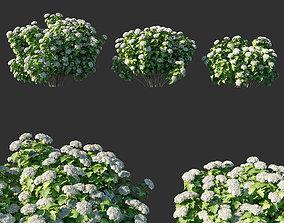 Viburnum opulus 04 3D