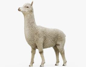 Alpaca Rigged with Fur 3D model