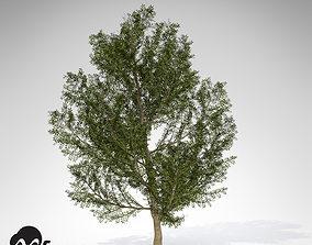 3D model XfrogPlant Lentisk
