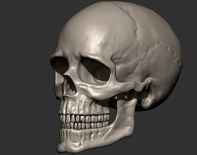 Skull anatomy 3D print model