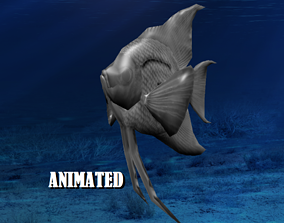 3D model angel fish animated