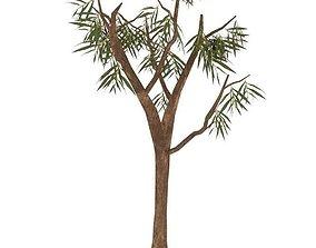 Eucalyptus001 3D asset