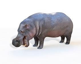 Hippopotamus Rigged hedgehog 3D
