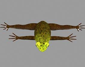 Frog Rig 3D asset