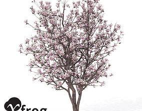 3D model XfrogPlants Saucer Magnolia 1