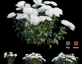 3D Chrysanthemum flower Plant set 04