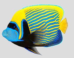 Emperor Angel fish 3D model
