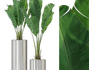 3D model Plants collection 324