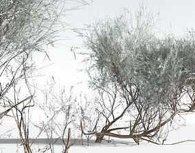 EVERYPlant Big Sagebrush LowPoly 11 --10 Models-- 3D asset