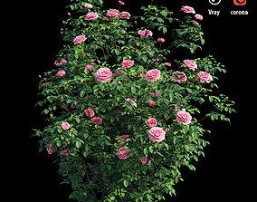 Rose plant set 52 3D