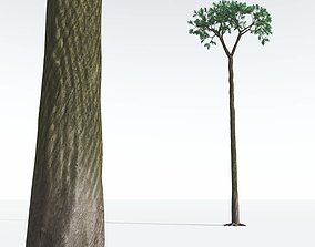EVERYPlant Spiny Scale Tree 02 --15 Models--