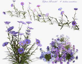 3D model Flowers Alpine Aster
