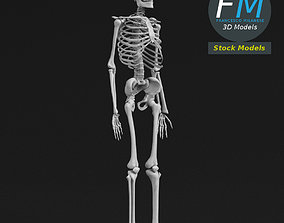 3D model Anatomy - Complete human skeleton