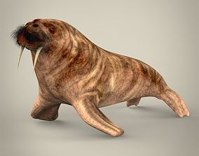 whale Realistic Walrus 3D