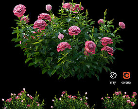 Plant rose set 01 3D model