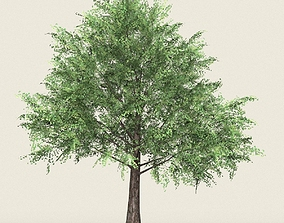 Game Ready Forest Tree 12 3D asset