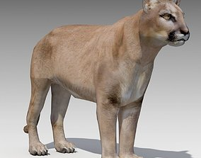 Cougar Animated 3D asset game-ready