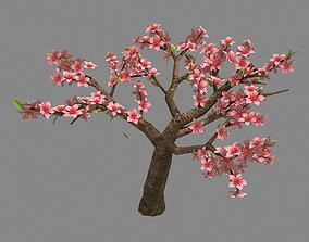3D Trees - Peach 24