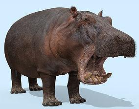 3D Wild Hippo 8K - Animated