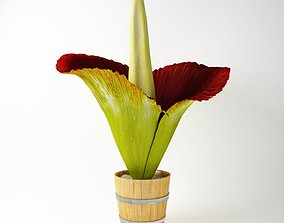Exotic Flower In A Pot 3D