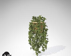 XfrogPlants Common Ivy 3D