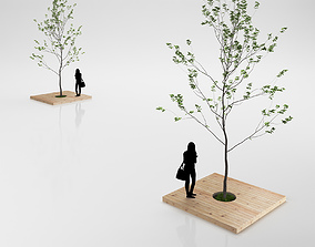3D model Minimalistic Young Tree on Wooden Base