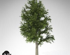 3D model XfrogPlants European Beech