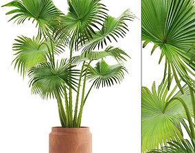 Palm in pot 3D