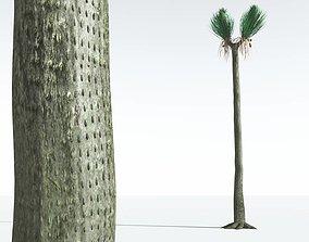 EVERYPlant Ovate Sigillaria 07 --18 Models--