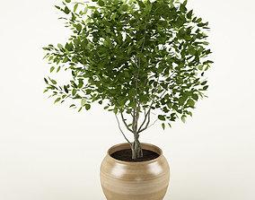 3D Plant 72