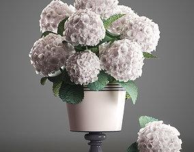 3D model Bouquet of white Hydrangea