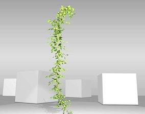 Ivy Vine - Version 11 3D model