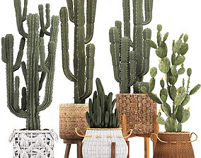 3D Collection of Exotic Cactus Plants 12