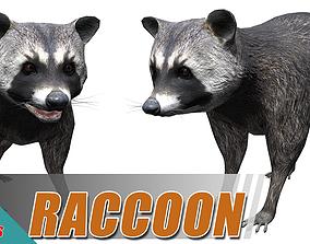 Common Racoon 3D model