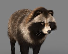 3D asset Realistic Raccoon Dog Tanuki
