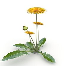 3D model dandelion flower plant