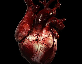 3D Heart Realistic Production