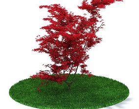 3D Red Leaf Tree