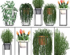 set Collection Exotic plants 3D model