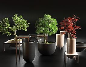 green 3D Bonsai Trees in Pots