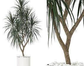 Plants collection 397 3D
