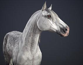 3D asset VR / AR ready Horse