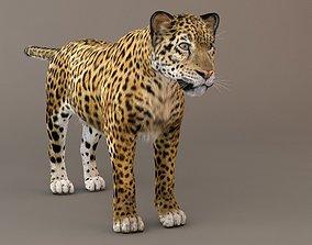 3D Jaguar fur Model