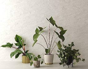 potted 3D model Pots with Plants 3
