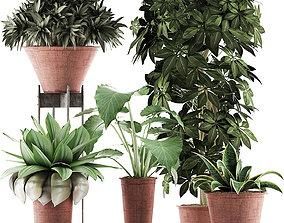 3D Plants Collection 35