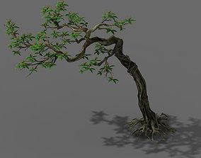 Plant - safflower tree 3D