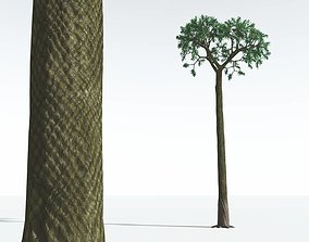 EVERYPlant Spiny Scale Tree 01 --15 Models-- 3D