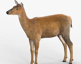 3D model VR / AR ready White-tailed deer