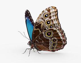 Morpho Butterfly HD 3D