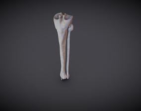 Tibia And Fibula 3D model